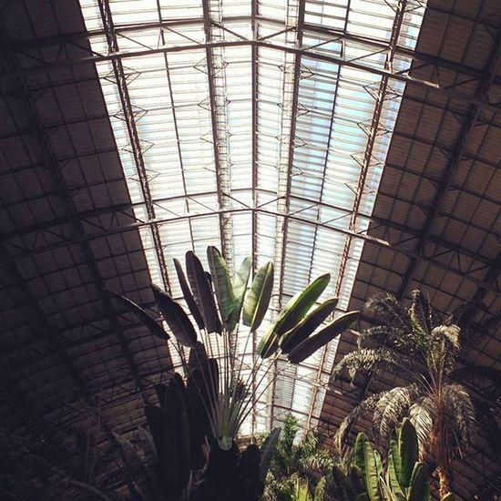 Madrid Atocha Plants Atocharenfe Travel Architecture Miguelgoni Photographie  Photography Photo Photooftheday