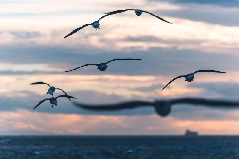 Flying away Cloud - Sky Bird Flying Sky Animals In The Wild Animal Wildlife Animal Themes No People Nature Animal Vertebrate Sunset Group Of Animals Water Beauty In Nature Focus On Foreground Outdoors Spread Wings Mid-air Seagull