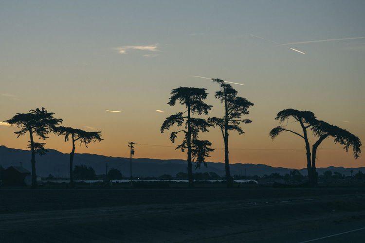 Beauty In Nature Day Landscape Nature No People Outdoors Palm Tree Road Scenics Silhouette Sky Sunset Tranquil Scene Tranquility Transportation Tree