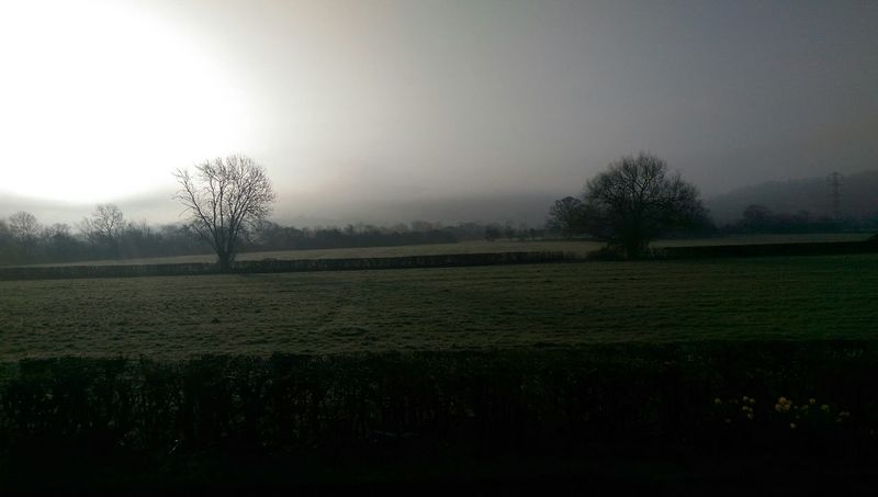 Goodmorning to you all Nature Morning Greenfields Trees Foggy Morning