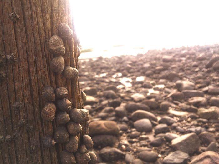 Cockles at the sea shore. Shore Shoreline Cockles Fish Sea Sand Coast Coastline Walking Around Wales