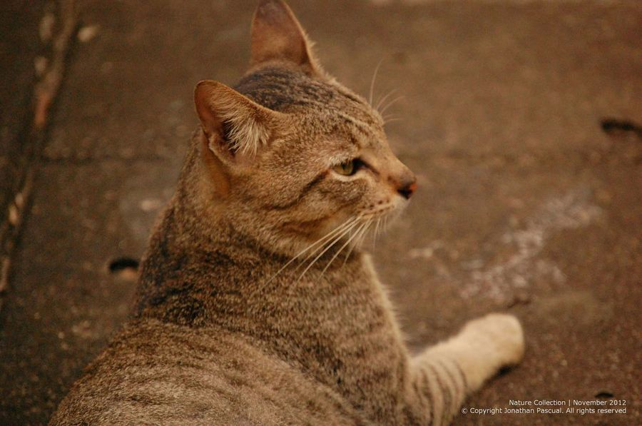This cat. Chilling and waiting for time to pass Cats Eeyemphilippines Animal Waiting Wildthing