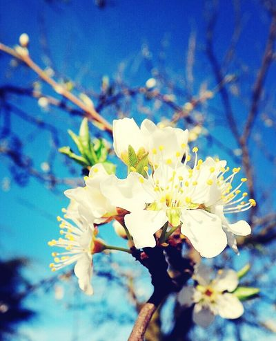 La primavera :) .. Buenos Momentos Primavera Flores Fotografia
