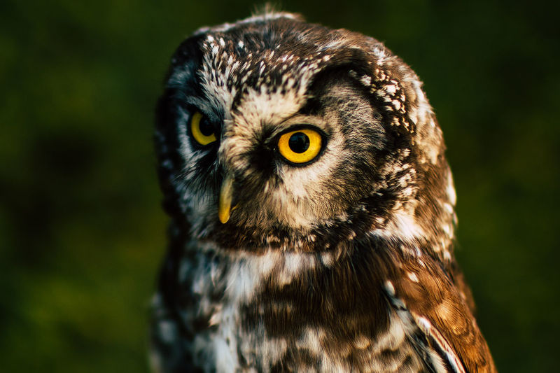 Close-up portrait of owl outdoors