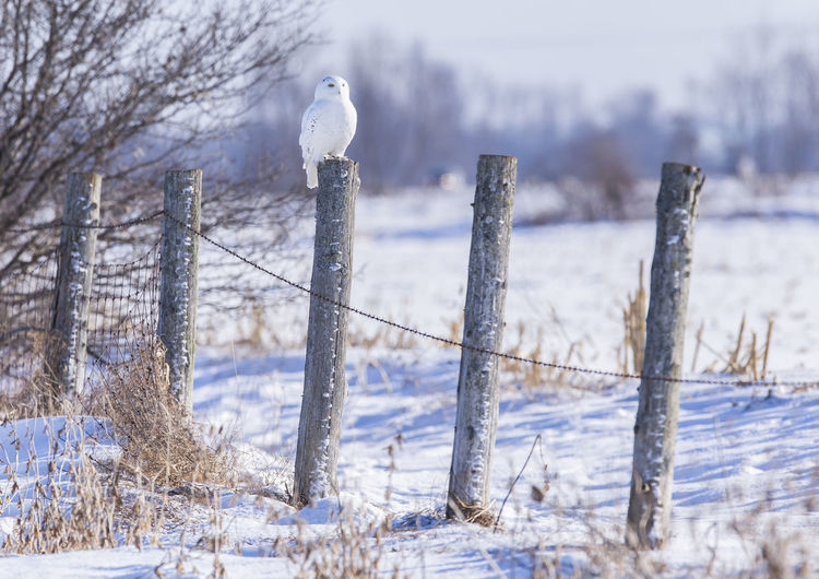 Birds perching on wooden post during winter