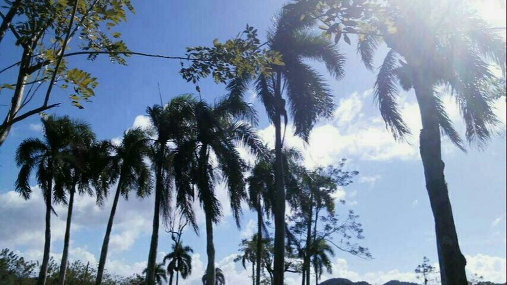❤ Dominican Republic Palm Tree Sky Nature Cloud - Sky Beauty In Nature Day See What I See Photography Illuminated VSCO Cam Followme On Snapchat Angier-xo Love ♥ VSCO No People Photobyme 📷 Taking Photos Vibrant Color Nature View Green Color