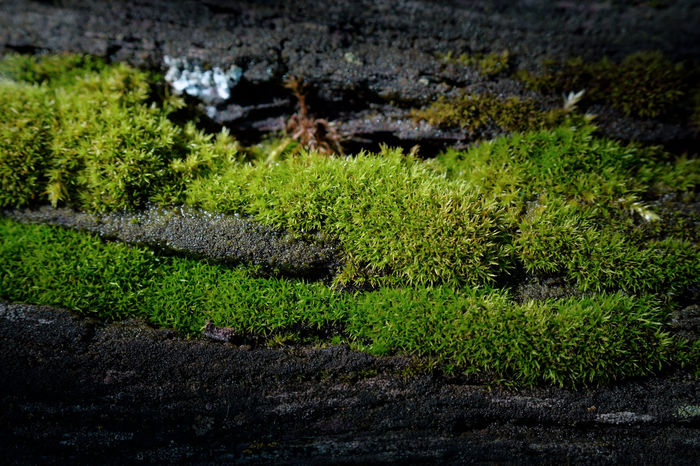 Streak Plant Green Color Growth Water Nature Beauty In Nature No People Tranquility Day High Angle View Outdoors Tranquil Scene Grass Lake Tree Moss Field Hedge Waterworld Greenery