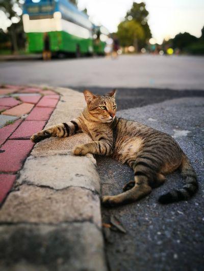 Portrait of cat lying down