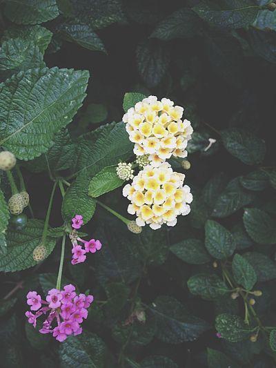 As coisas mais simples são as mais bonitas Flores Amomuito