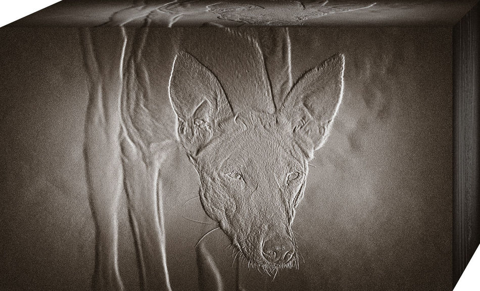 Abstract Ancient Civilization Animal Themes Art And Craft Egypt Fine Art Photography Ibizan Hound One Animal Portrait