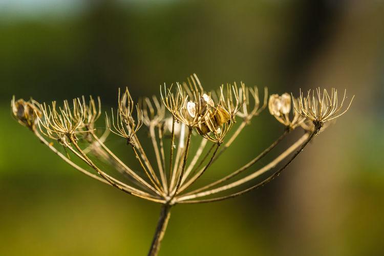 Flore de