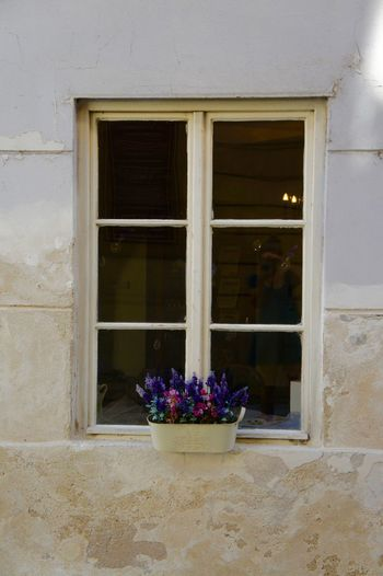 #City #decoration #flowers #Prague #ramshackle #reflection #ruinous #side Alley #Window