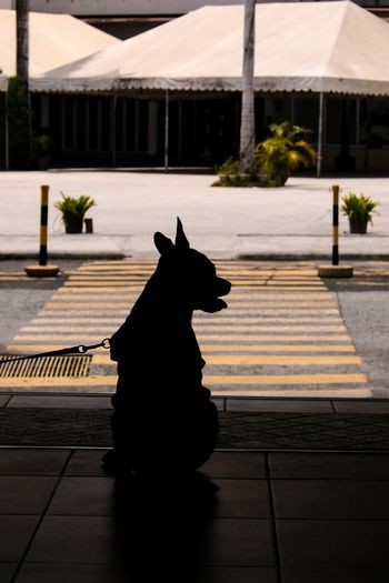 EyeEm Best Shots EyeEm Selects Eyeem Philippines Dramatic Dog Chiuahua Sillhouette Pets Pet Collar Canine Dog Lead Pet Leash