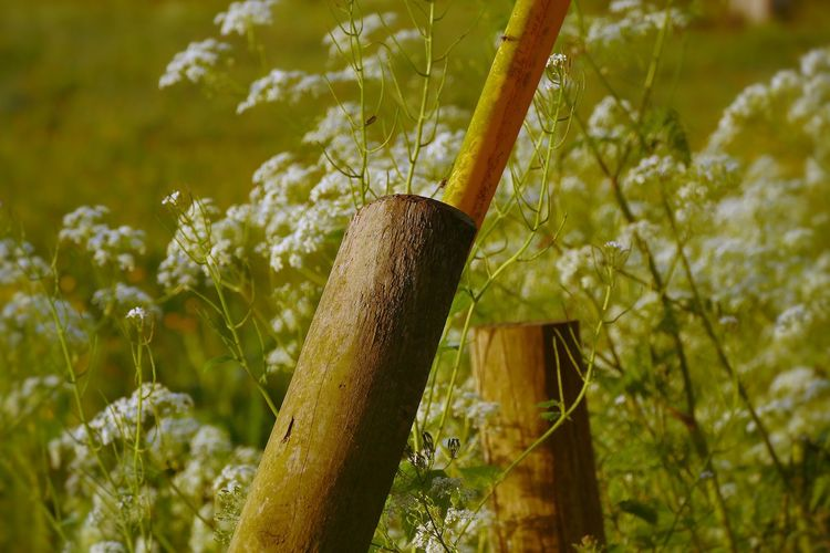 Growth Day Nature No People Outdoors Green Color Tree Close-up Plant White Flowers Fence Posts A Frame BYOPaper! The Great Outdoors - 2017 EyeEm Awards Place Of Heart Perspectives On Nature A New Perspective On Life