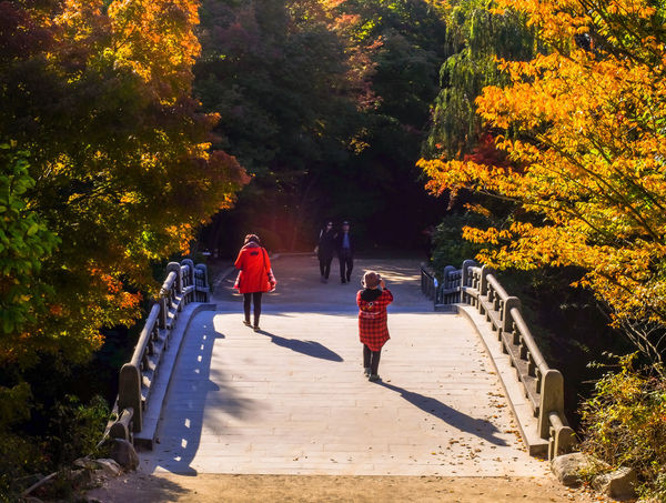 Haetalgyo bridge of Bulguksa temple Across Architecture Haetalgyo Historic Temple ASIA Ancient Autumn Beautiful Buddhist Famous Gyeongju Korea Korean Autumn Bridge Buddhism Bulguksa Colorful Heritage Lifestyles Nature Outdoors Tree Walking