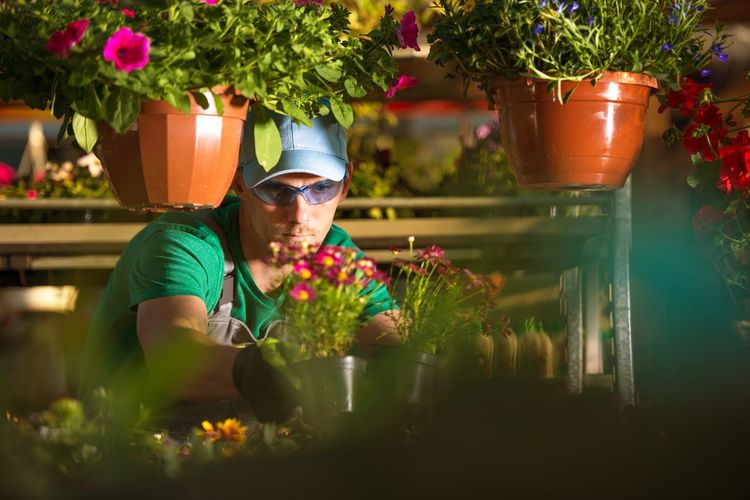 Man looking at plants in greenhouse