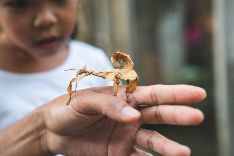 Close-up of girl looking at cropped hand holding insect