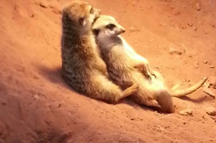 relaxing Animals