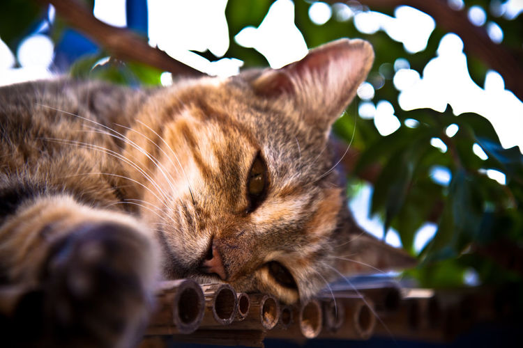 A lazy cat in the Greek summertime. Cats Of EyeEm Chilling Relaxing Animal Themes Cat Cat Lovers Cats Cat♡ Chill Chill Mode Chillin Close-up Day Domestic Animals Domestic Cat Feline Indoors  Mammal Nature No People One Animal Pets Relax Relaxation Whisker