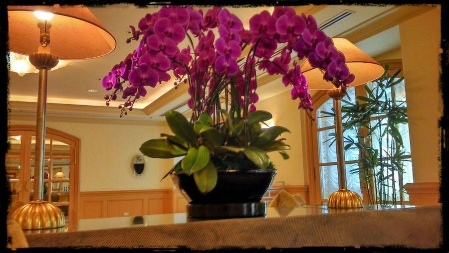 Flowers Taking Photos Colors Designing Interior Design