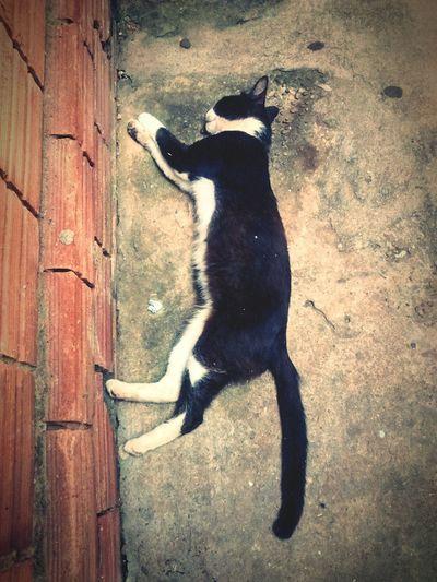 Cat Relaxing Moto G Motog Animal