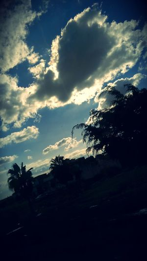 Cloud - Sky Sky Nature Tree Dramatic Sky Beauty In Nature Egypt Alexandria Cairo