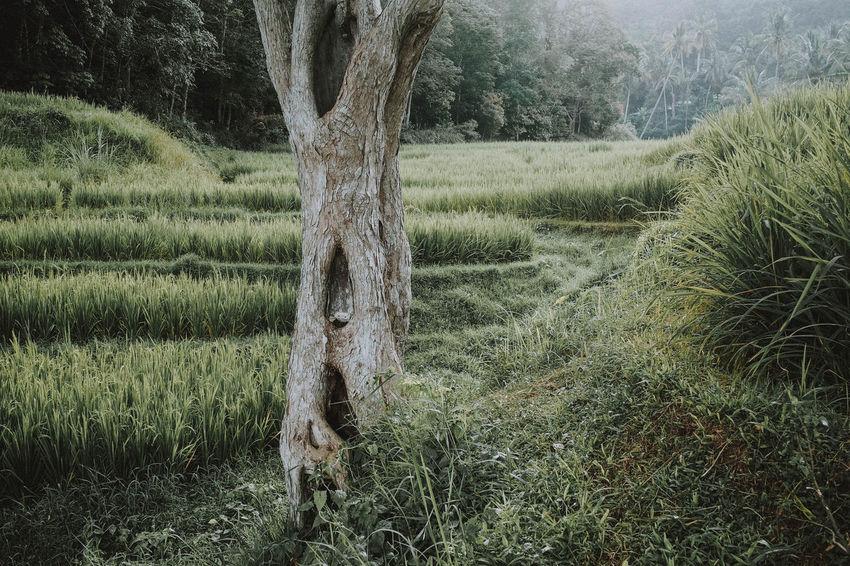 Lintau, 2018 Travel Destinations Nature Landscape People Green Olympus Autumn Mood