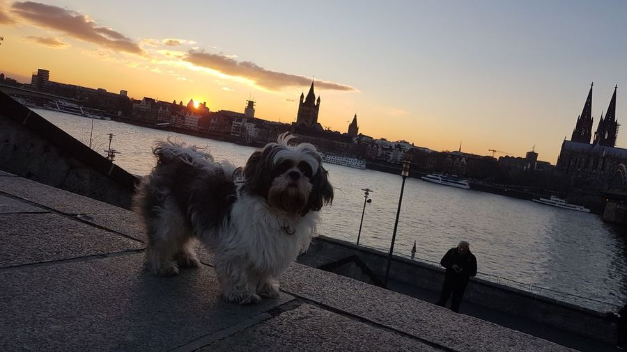 Dog on riverbank in city against sky during sunset