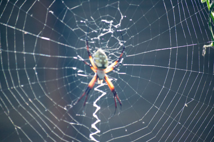 Animal Themes Animals In The Wild Close-up Fragility Nature One Animal Spider Spider Web Survival Web