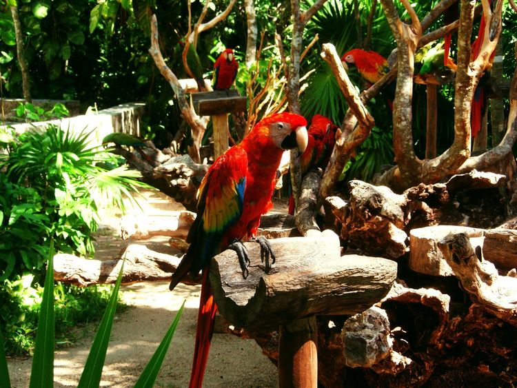 Eyeem Nature EyeEm Nature Lover Parrot Birds Bird Photography Color