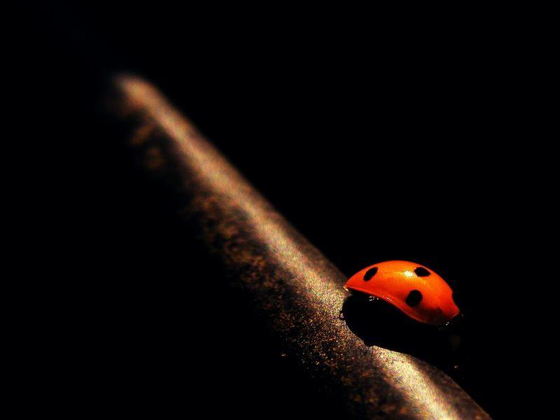 leuchtpunkt Ladybird Beetle Dark Light Light Shiny Good Luck Fujifinepix