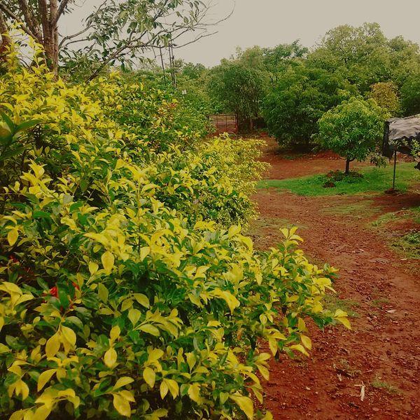 At our farmhouse Farmhouse Nature Serene Beautiful Geeen India Maharashtra Incredible