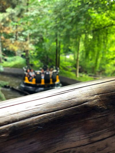 Amusement Park Water Park Tree Day Nature Plant Focus On Foreground Transportation Outdoors