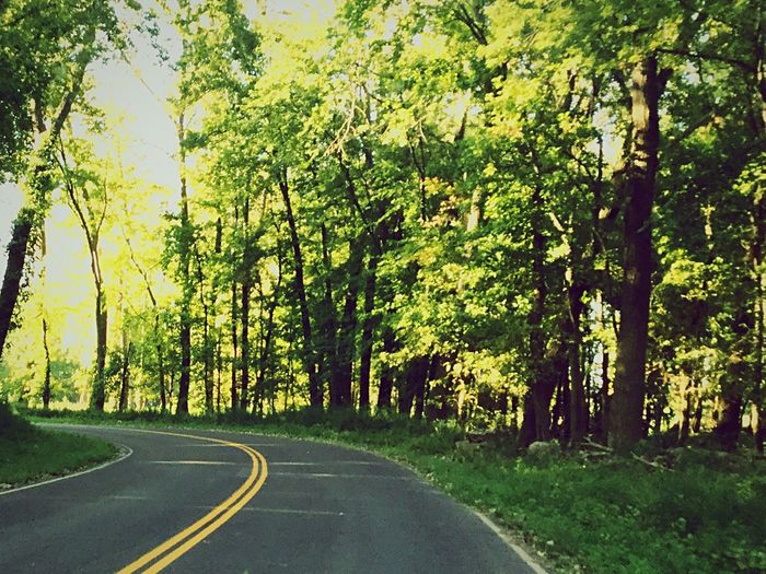 Road Tree The Way Forward Nature Tranquility Tranquil Scene Day Outdoors Scenics Beauty In Nature No People Landscape Forest Transportation First Eyeem Photo