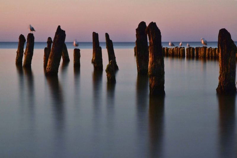 Waterfront Tranquility Wooden Post Tranquil Scene Water Group Of Objects Blue Majestic Beauty In Nature Seagull Baltic Sea Long Exposure Scenics No People
