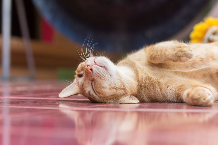 Close-up of cat relaxing on floor