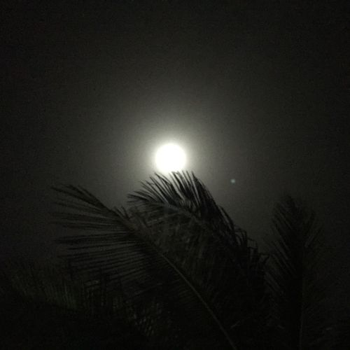 Africa again❤️ Dakar Senegal Africa African Beauty Palm Trees Moonlight Moon Hello World Discovering Enjoying Life Check This Out Nightphotography Night Lights