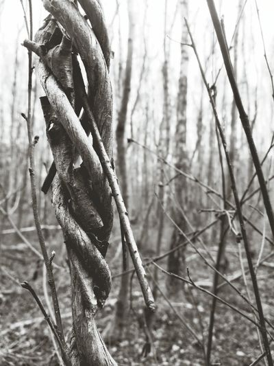 Tree Nature Beauty In Nature Close-up Forest Tranquility Outdoors Vines Twisted Natural Rope Black And White