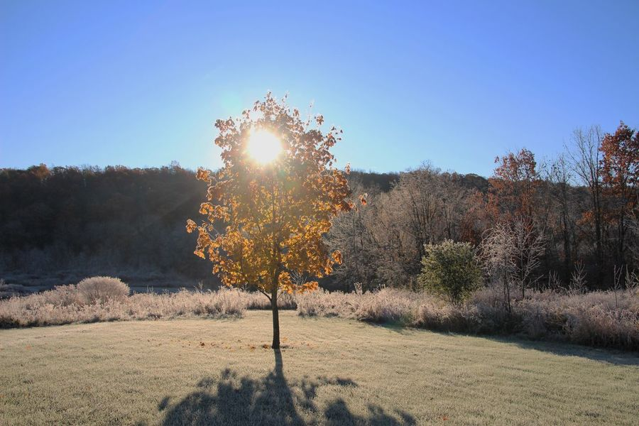 first frost and sunrise made for a beautiful combination with this little tree First Frost One Tree Beauty In Nature Clear Sky Nature No People Outdoors Scenics Sunlight Sunrise Tranquil Scene Tranquility Tree