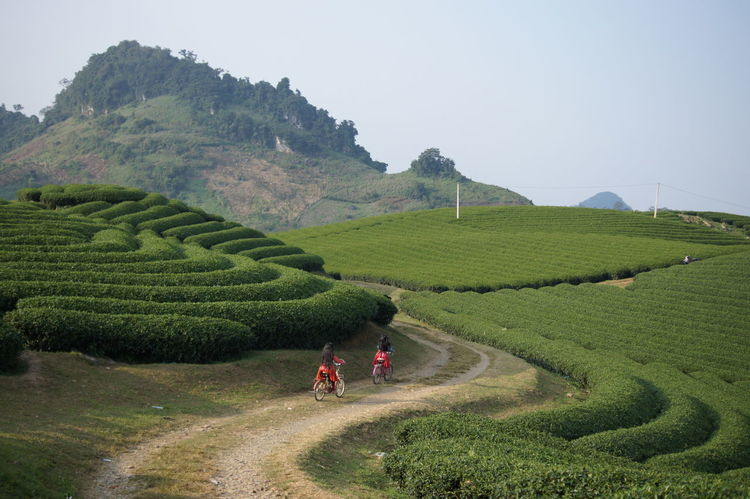 two girls riding bicycles through green tea farm Ethnicity Beauty In Nature Bicycle Farm Field Green Tea Kid Nature Tea Crop Two People