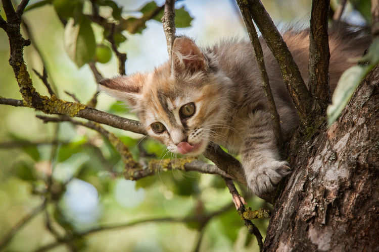 Low Angle View Of Cat On Tree Trunk