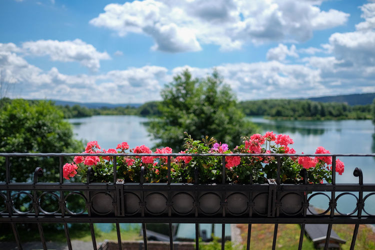 Niedernberg Beauty In Nature Blooming Blossom Cloud Cloud - Sky Cloudy Day Flower Fragility Freshness Growth In Bloom Nature No People Outdoors Petal Pink Color Plant Red Scenics Sky Tranquil Scene Tranquility Tree Water