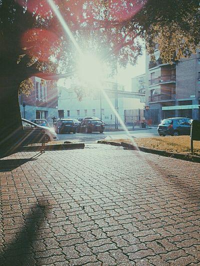Sunshining Intothetree Milan