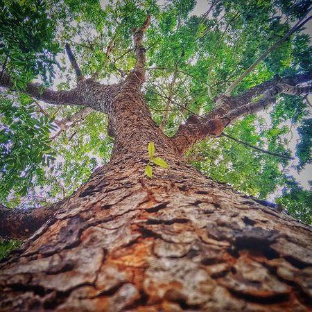Hope is what tree teaches you Hope Love Tree Photographyy Pondicherryuniversity Pondicherry