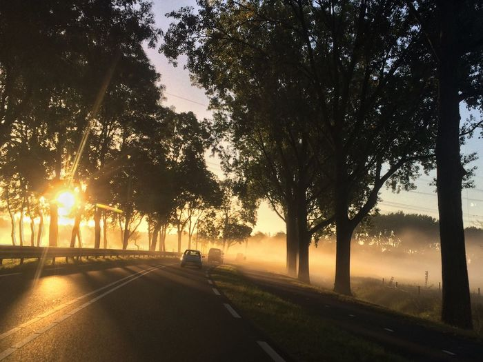 Foggy Morning Sunrise Outdoors Sunlight Sun Tranquil Scene Tree On The Road Beauty In Nature Beautiful Nature Beautiful Day Autumn Colors Fall Beauty