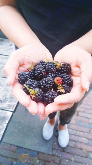 Handful of fresh berries from farms of beautiful netherlands