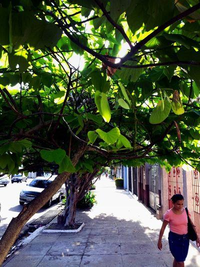 Bernal do Couto street. Um punhado de verde.