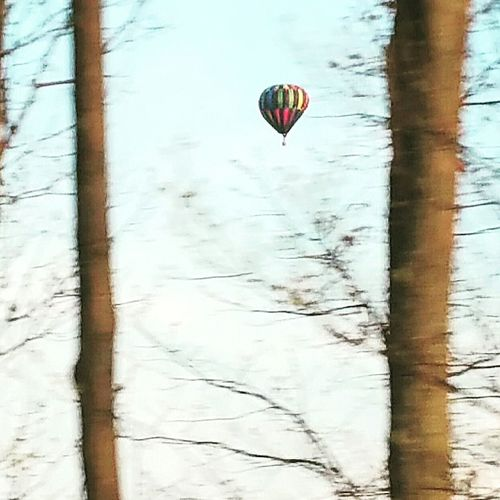 Check This Out Sky And Trees Hot Air Balloon