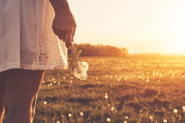 Midsection Of Woman Holding Dandelion While Standing On Field Against Sky During Sunset