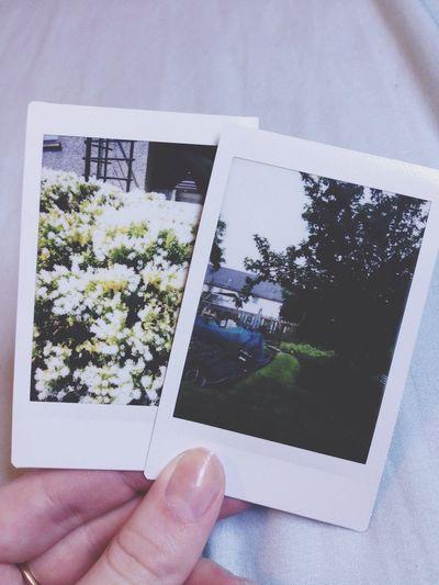 Polaroid Instaxmini8 Garden